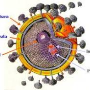 Cura funcional del VIH